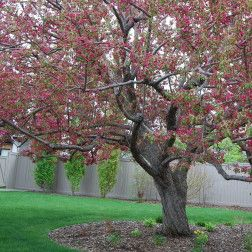 Deep Root Tree Fertilization Service, Calgary AB
