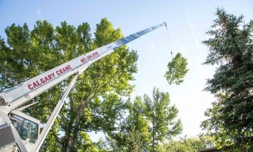 Crane Aided Tree Removal