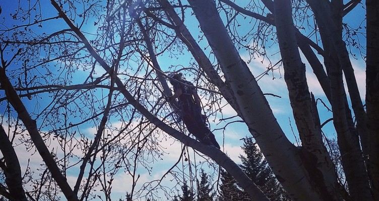 Cleaning up storm damage arborist yyc