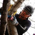 ISA Certified Arborist Matt Davis Calgary AB