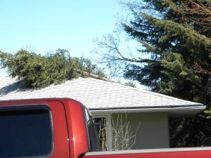 Spruce stem broken on house