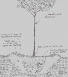 Planting Detail