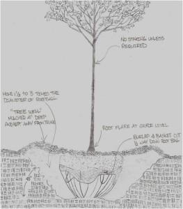 Tree Planting Detail