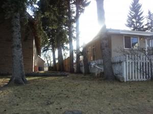 Fallen Spruce - Hillhurst