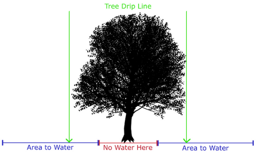 Calgary Tree Watering Diagram