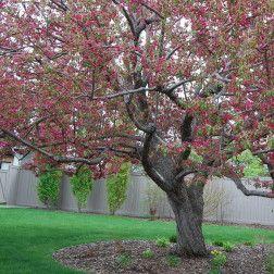 Deep Root Tree Fertilization Service, Calgary AB