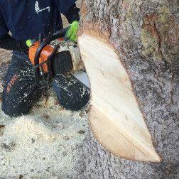 Expert Tree Removal Calgary