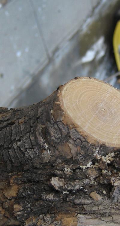 Tree Pruning Calgary