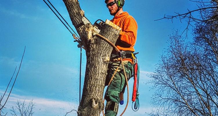 Arborist Tree Removal Calgary